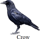 This image define the bird – Choice C