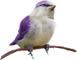 This is the bird image
