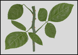 This image shows that the branch of plant