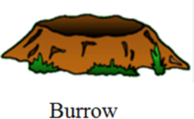This image shows the Burrow