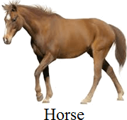 This image define the domestic animal – Choice A