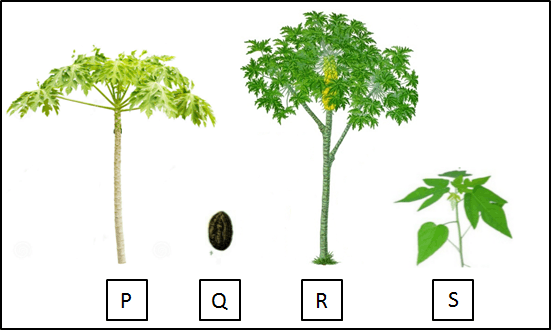 This picture shows that the plant grow form a seed