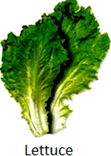 The image of leafy food and stem food - Choice D