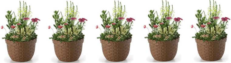 5 flower pots with 8 flowers each