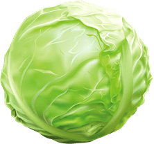 Image shows the vegetable