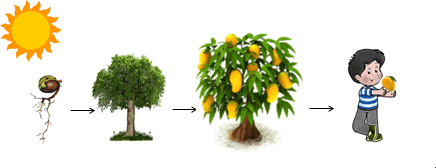 The plant humans eat parts of the plant to get energy –choice C