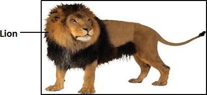 shows Image of lion