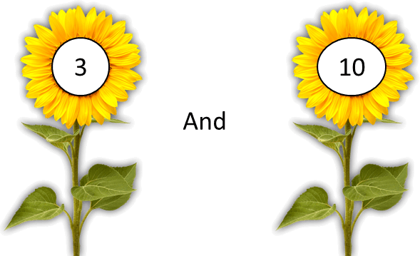 This image shows the pair of flowers – Choice A