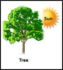 The image of tree and sun