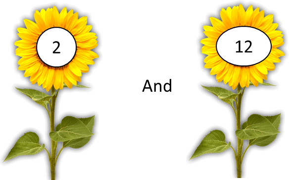 This image shows the pair of flowers – Choice C