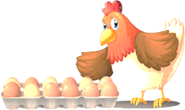 One hen with tray of eggs