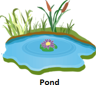 shows the image of pond