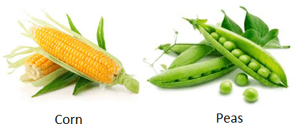The image of corn and peas
