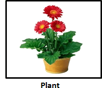 The image of the plant