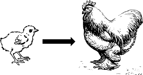 This figure shows the hen and their baby