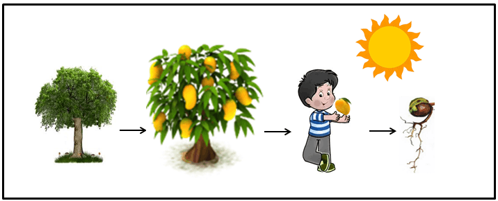 The plant humans eat parts of the plant to get energy choice A