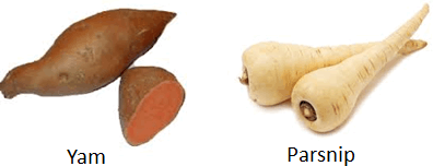 The image of yam and parsnip