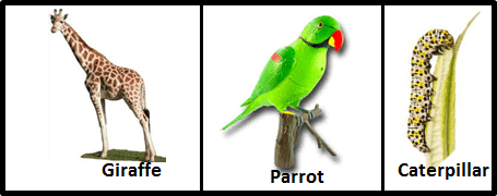 Image of giraffe, parrot and caterpillar