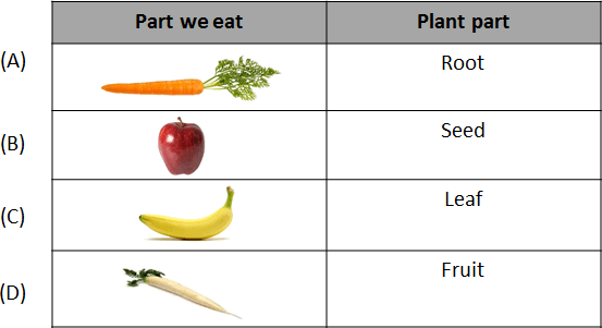 There are parts we eat and plant part.