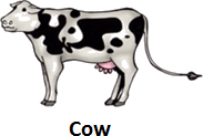 The picture is a cow – What type it is