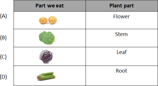 The graph of two parts we eat and plant part