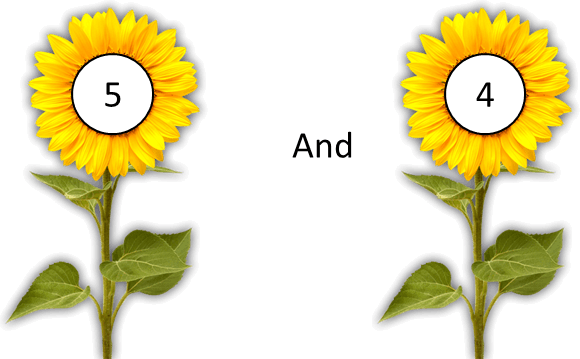 This image shows the pair of flowers – Choice B