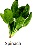 The image of leafy food and stem food - Choice A
