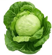 This image show the cabbage