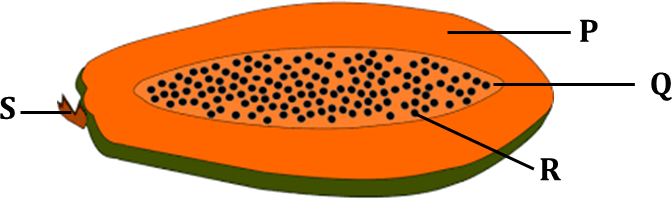 Diagram shows the cross section of a papaya fruit