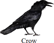 This image shows the bird – Choice C