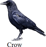 This figure shows bird – Choice A