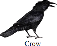 This bird is a perching bird or not – Choice C