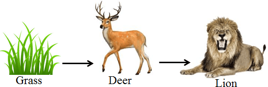 In this diagram shows the food chain – Choice B