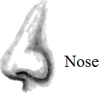 This image shows the nose