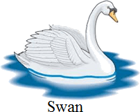 This bird is swimming bird or not – Choice C
