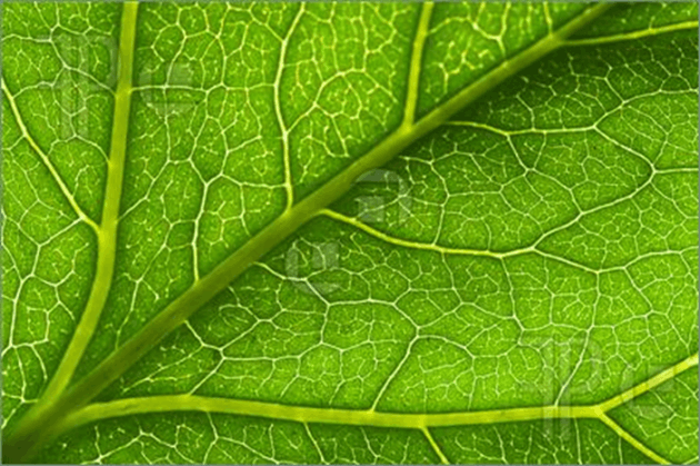 This image show the part of in leaf