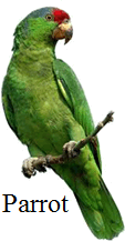 This bird is preying bird or not – Choice C