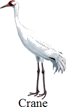 This image is a waterbird or not – Choice A