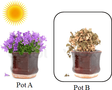 This figure shows the plant pot A and pot B