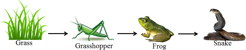 This diagram show the food chain