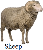 This animal image is domestic or not – Choice B