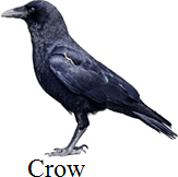 This bird has beak to uses to pull out insects or not:Choice C