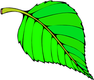 Image shows the leaf