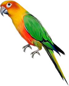 Image shows the bird – Choice A