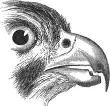 Image shows the missing bird beak – Choice D