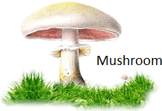This image show the mushroom