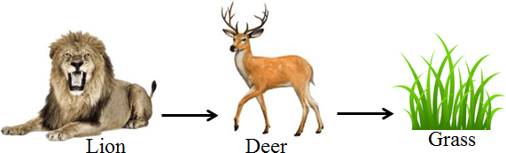 In this diagram shows the food chain – Choice D