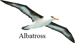 This image of albatross bird