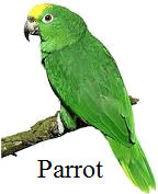 This bird's beak to climb branches or not – Choice B
