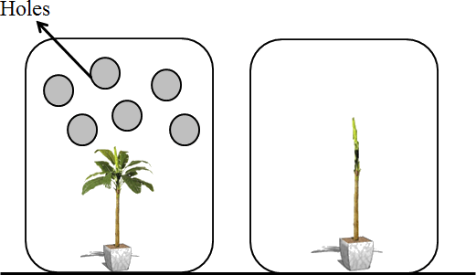 This diagram shows the plant in container A and container B
